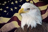 Bald eagle with american flag out of focus.