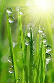 dew drops closeup