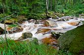 Wild creek