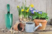 Spring Flowerpots