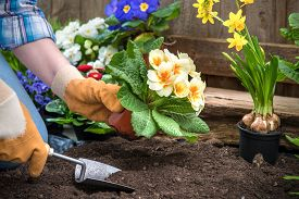 foto of pottery  - Gardener planting flowers in pot with dirt or soil at back yard - JPG