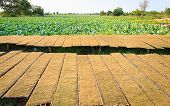 picture of tobacco barn  - Dried tobacco after mince in northeast of Thailand - JPG