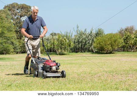 Senior gardener mowing his green lawn in garden. Man working in garden cutting grass with lawn mower