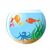 Various fishes in aquarium