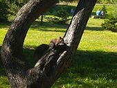 Black Squirrel In The Park Tree Green Meadow Branch Summer  poster