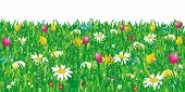Easter And Spring Meadow Background On White