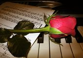 Rose Piano Music Brown