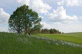 Forest Margin