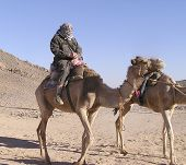 baby boomer Tourist On Camel poster