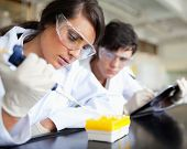 Serious young scientists working in a laboratory