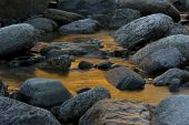 picture of engadine  - Stones in golden water - JPG