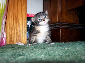 Baby Kitty Pose