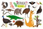 Australian Animals. Vector Animal Icons Of Australia, Kangaroo And Koala, Wombat And Ostrich Emu, Pl poster