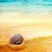 Sea Shell On Fine Sand