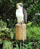 Philippine Eagle Davao Philippines