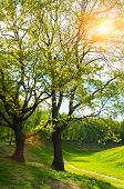 Spring Colorful Landscape, Spring Trees In The Park. Green Park Spring Trees And Sunlight Shining Th poster