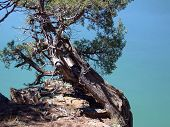 Juniper Above A Green Lake