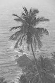 Beautiful Palm Trees On The Background Of The Sea And The Sun. Palm Trees On A Sunset Background. Tr poster