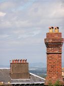 Victorian Chimneys