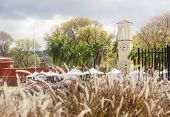 pic of sea oats  - Clock tower and street market on the coast of St Croix beyond sea oats - JPG