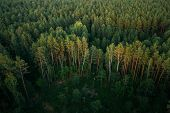 Aerial View Of Green Forest Landscape. Top View From High Attitude In Summer Evening. Drone View. Bi poster