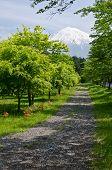 Fuji Path