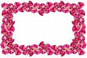 Pink Tulips Frame