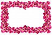 Pink Tulips Frame