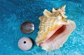 Seashells On A Tropical Textile