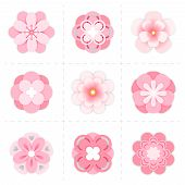 Pink Paper Sakura Flowers. Blossom Sakura Flowers Isolated On White Background, Vector Cherry Blosso poster