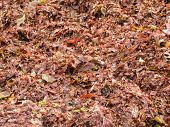 Close-up of washed ashore red seaweeds and algae