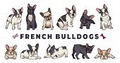 French Bulldogs. Vector Bulldog Set. Funny Cartoon Puppy Isolated On White Background. Puppy Bulldog poster