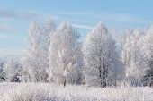 Winter Landscape Of Frosted Trees Against A Blue Sky On A Sunny Morning, Winter Frost. Winter Tide,  poster