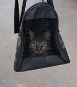 The Cat Is Carried In A Bag To The Vet.the Cat Is Carried In A Bag To The Vet poster