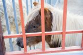 Pony Is Behind The Bars Of The Cage.pony Is Behind The Bars Of The Cage poster