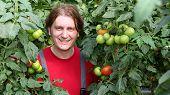 Smiling Worker Picking Tomatos