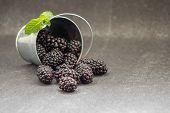 Small Metal Bucket With Blackberries On Table. Yummy Dewberries. Organic Brambles. Healthy Vegan Sna poster