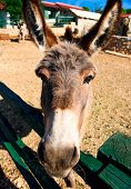 Donkey Outdoors