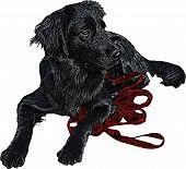 Black Labrador Retriever Illustration