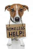 stock photo of runaway  - Homeless Dog holding a brown small cardboard - JPG