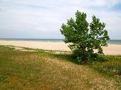 Tree by Beachfront
