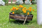 Retro Vintage Old Leaning Lower Part Of Wooden Barrel Used As Decorative Large Flower Pot Filled Wit poster