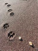 海滩狗爪印