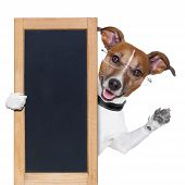 stock photo of border terrier  - dog behind a blackboard banner and 