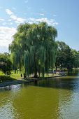 View Of The Common Park Lake In Boston