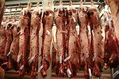 picture of slaughterhouse  - Several cattle carcass hung in a refrigerator of an abattoir - JPG