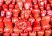 foto of tambis  - Fresh red rose apple fruit in the market - JPG