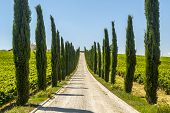 Umbria - Road With Cypresses
