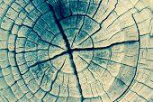 Closeup of Old Pine Saw Cut.