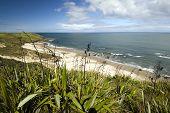 West coast beach, North Island, New Zealand